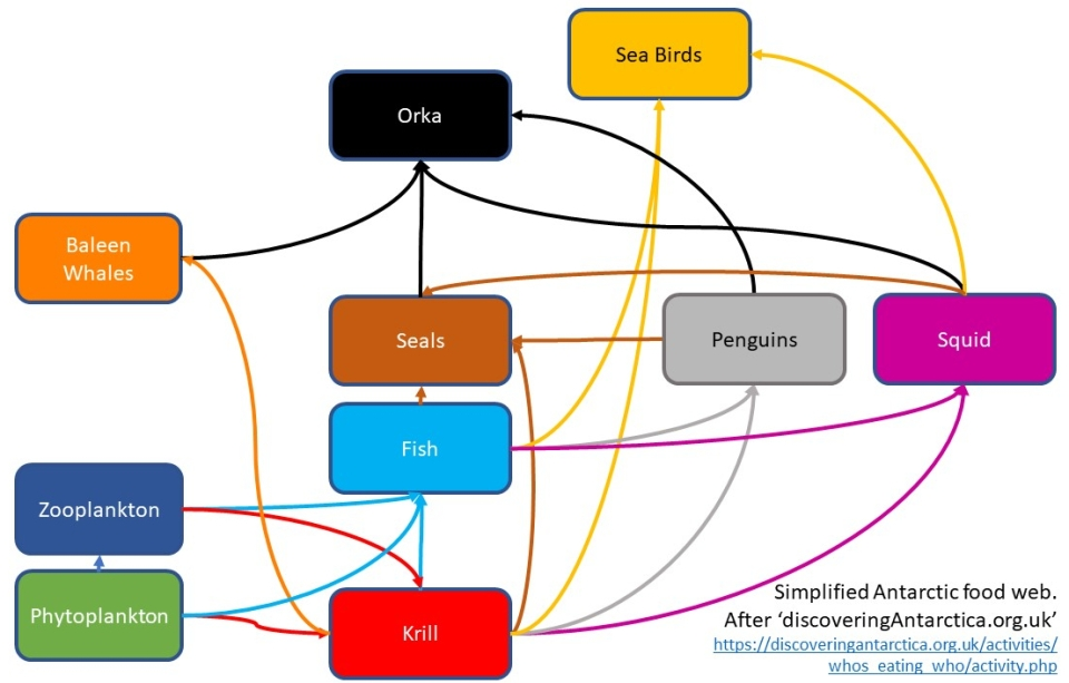 food web in Antarctic waters